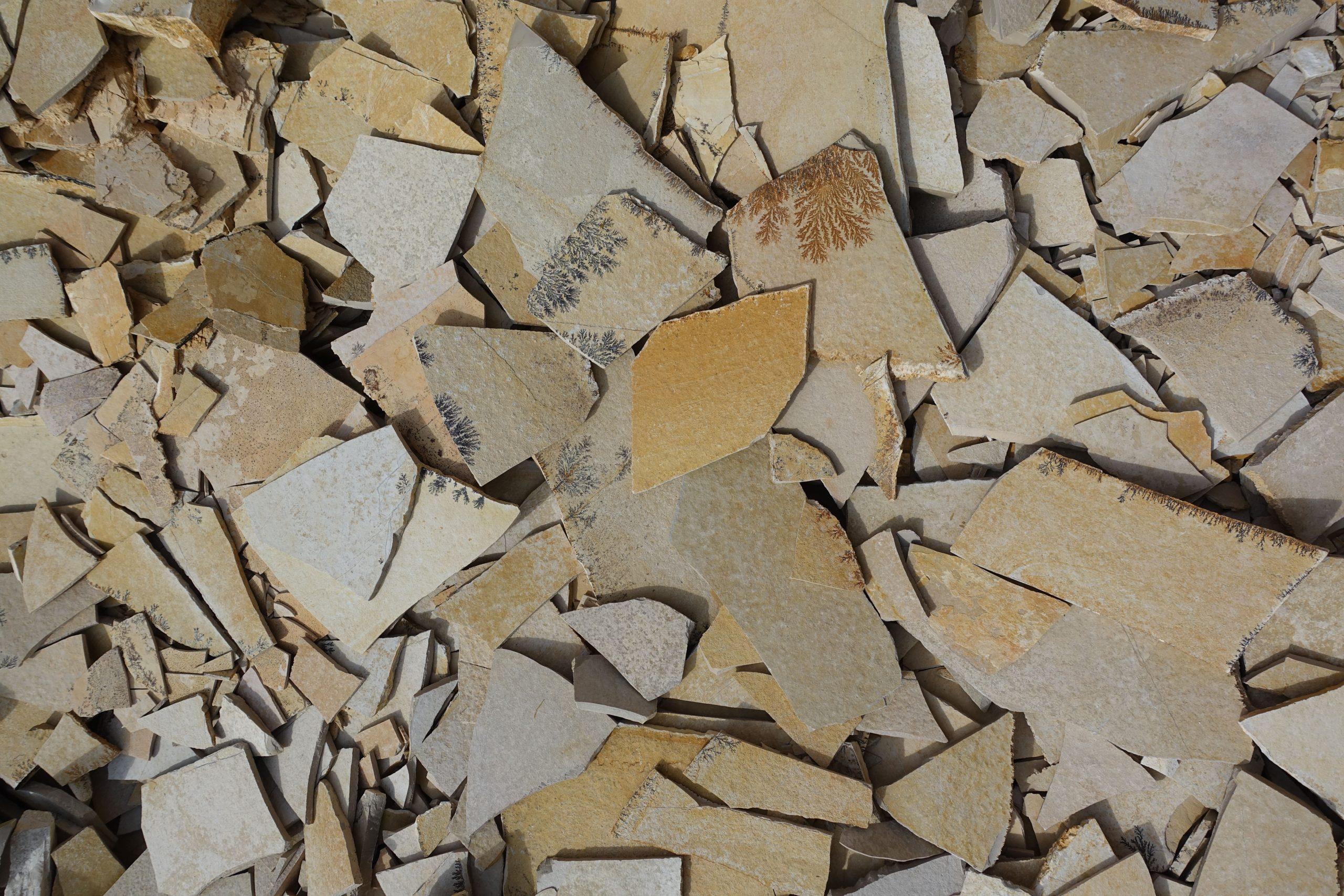 fragmenten Solnhofener kalksteen